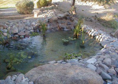 pond Paradise Ponds and Gardens